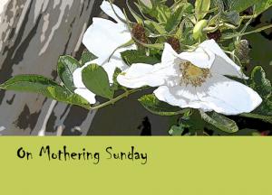 rose-mothering-sunday