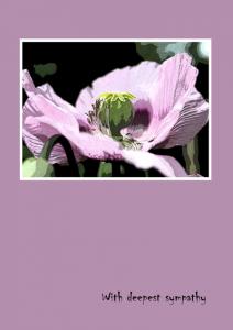 sympathy-poppy-lilac