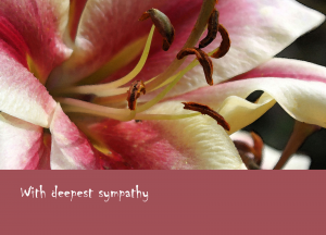 lily-sympathy-plum