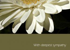 2014-daisy-sympathy