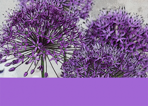 2014-purple-flowers