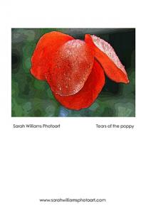 tears-of-poppy-poster