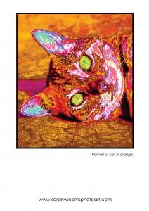 cat-in-orange