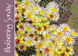 daisies-yellow-purple