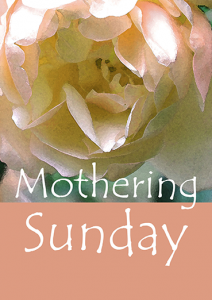 mothering-sunday-rose