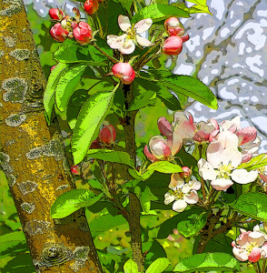 apple-blossom-sml