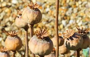 seedheads-rotated